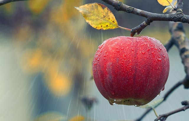 Best Free Keyword Search Tool - a red apple hanging from a tree